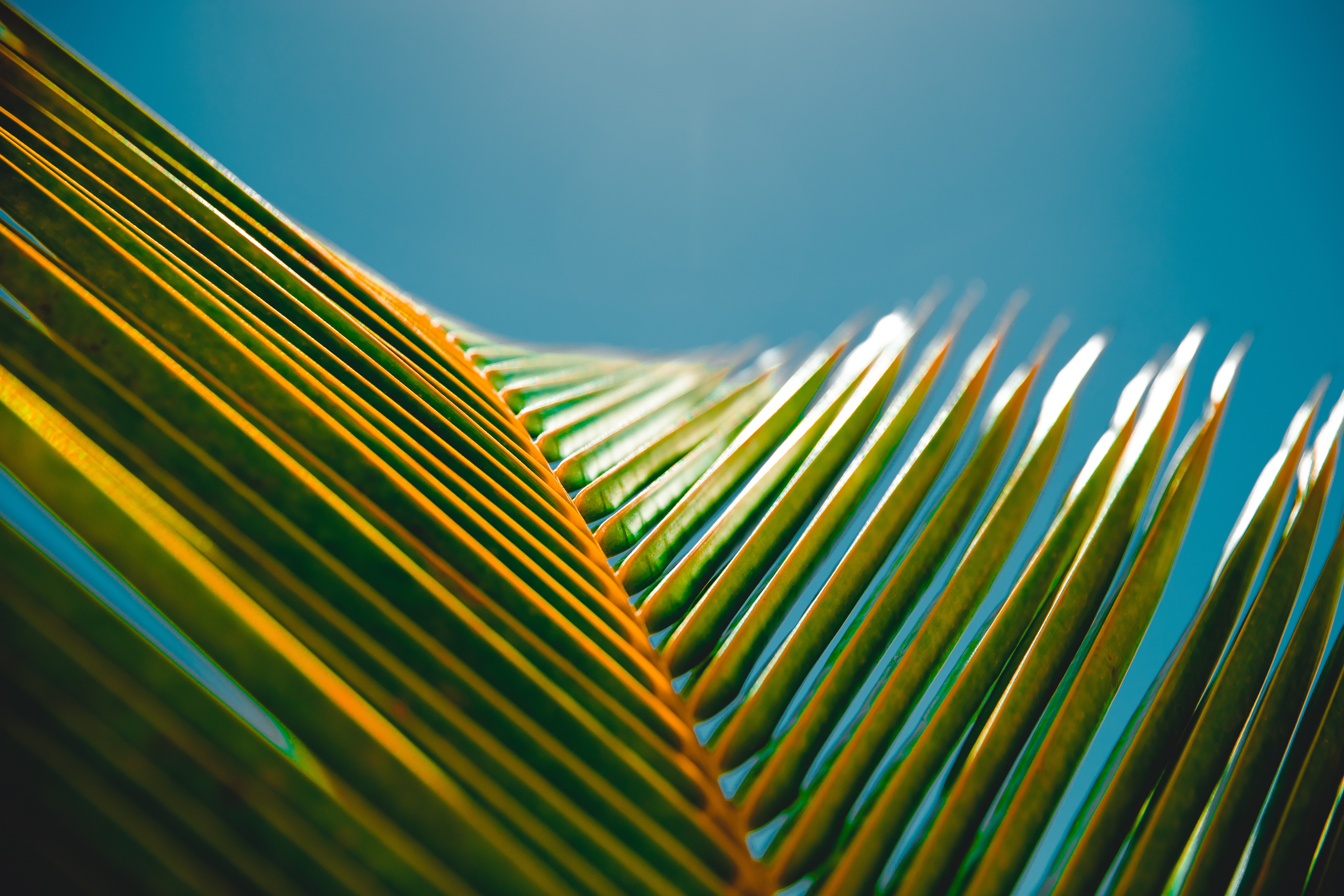 uh-leaf